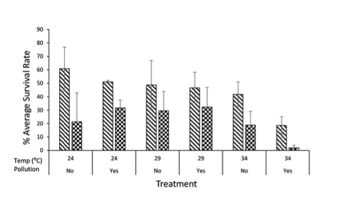 Average percent survival rate of under temperature and pollution treatments. The plot shows the mean values along with the standard error bars for each treatment. The lined bars represent Day 4 Treatment and the checkered bars represent Day 6 Treatment for each of the treatments.