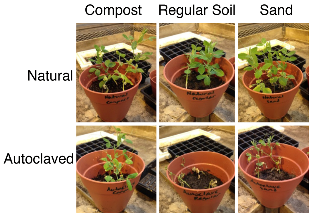 The benefits of microbial communities on the fitness of for Garden soil types